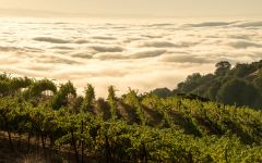 Ridge Monte Bello  Winery Image