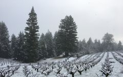Carlisle DuPratt Vineyard in Winter Winery Image