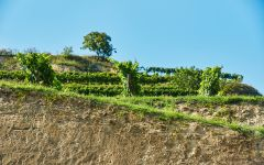 Laurenz V Loess soils Winery Image