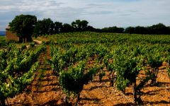 Domaine Giraud Grenache Grown on Red Clay and Gravel Winery Image