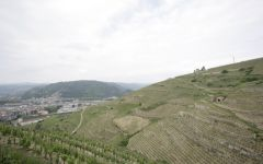 M. Chapoutier Hermitage looking at the Rhone River Winery Image