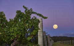 Cullen Winemaking Philosophy Winery Image
