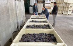 Paul Lato Wines Harvest Production Winery Image