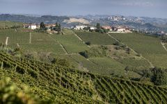 Coppo Canelli Vineyard Winery Image