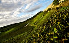 Champagne Bollinger Cotes Aux Enfants Estate Vineyard Winery Image