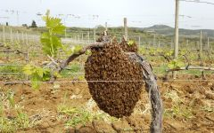 Argiano Beehive in the Vineyard Winery Image
