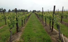 Smith Story Wine Cellars In the Vineyard…Family First Winery Image