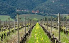 Lapostolle Clos Apalta Winery in Spring Winery Image