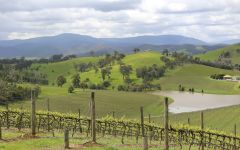 Handpicked Wines Highbow Hill Vineyard Winery Image
