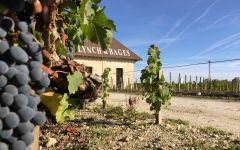 Chateau Lynch-Bages A Close Look at the Terroir and Vineyard Winery Image