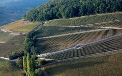 Domaine Antonin Guyon Corton Hill Winery Image