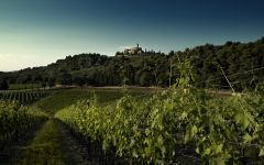 Castello Banfi The Lush Landscape at Castello Banfi Winery Image
