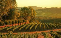 Burgess Cellars Haymaker Vineyard Winery Image
