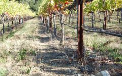 The Counselor Loam Clay Soil with Volcanic Rocks Winery Image