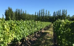 Bodega Chacra Chacra's Biodynamicaly Farmed Vines Winery Image
