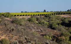 Concha y Toro Quebrada Seca Vineyard Winery Image