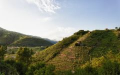 Bisol The Prosecco hills Winery Image
