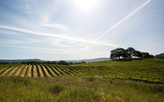 Hall Hardester Ranch Vineyard in Napa Valley Winery Image