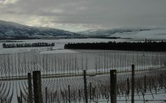 Quartz Reef May Snow in Winter with Southern Alps Winery Image