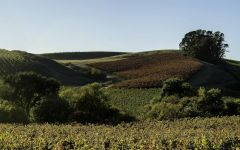 Au Contraire Carneros Vineyard Panorama Winery Image