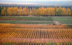 Bodegas Caro Bodegas Caro Vineyard in Autumn Winery Image