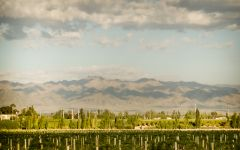 Argento View of the Andes from Argento Winery Image