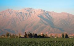 Almaviva Almaviva's Vineyards Against the Andes Winery Image