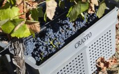 Quinta do Crasto Quinta Do Crasto Harvest Winery Image
