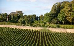 Domaine Tollot-Beaut Winery Image