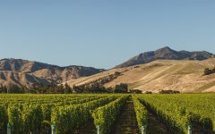 Wither Hills Taylor River Vineyard Winery Image