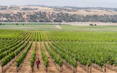 Nielson Winemaker Ryan Pace in Nielson Vineyard Winery Image