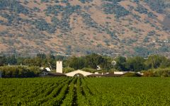 Robert Mondavi To Kalon Vineyard and WInery Winery Image