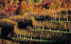 Verus  Winery Image