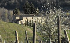 Il Molino di Grace  Winery Image