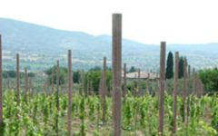 Paolo Bea Winery Image