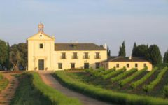 Marques de Grinon Winery Image