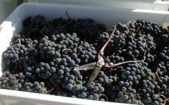Almaviva The Malbec Harvest in Full-Swing Winery Image