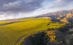 Hahn Winery Santa Lucia Highlands Doctors Vineyard Winery Image