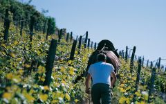 Domaines Schlumberger Horses Helping in the Vineyard Winery Image