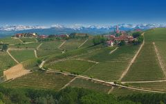 Bruno Giacosa Panorama of Vineyards in Neive Winery Image