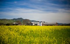 Silver Oak Napa Valley Mustard Field Winery Image