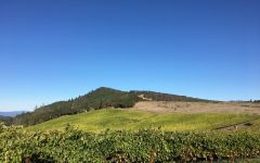 Carlisle Radiant Ridge Vineyard Winery Image