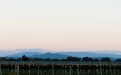 Frisk Alpine Valley at Dawn Winery Image