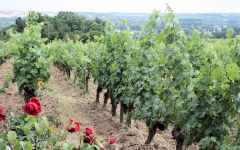 Domaine aux Moines Vineyards in the Loire Valley Winery Image