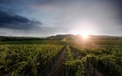 Kenwood Sonoma Valley Vineyard Winery Image