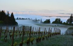 Eyrie Organic viticulture Winery Image