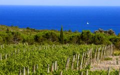 Cote des Roses South of France Winery Image