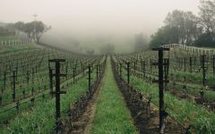 Abreu Vineyards Madrona Vineyard Winery Image