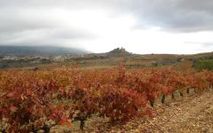 Sierra Cantabria Winery Image