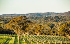 Yangarra Estate Vineyard Yangarra Estate Vineyard Winery Image